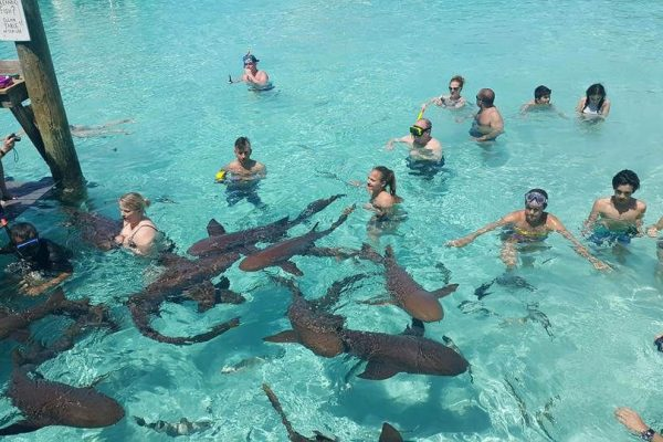 Comfort Venture Tours Swimming With Sharks